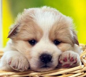 20 Frases Célebres Sobre Os Animais Baby Dog Pet Shop Veterinária