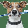 brushing-dog-teeth