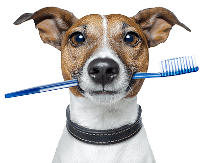 brushing-dog-teeth